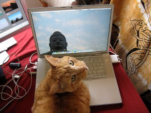 800px-Computer_Using_Cat